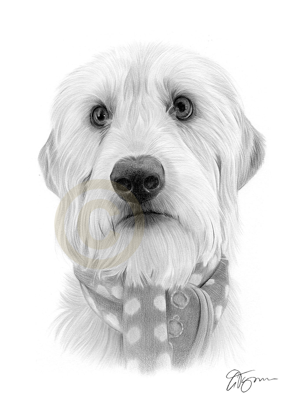 Pet portrait commission of a dog called Sandie by artist Gary Tymon
