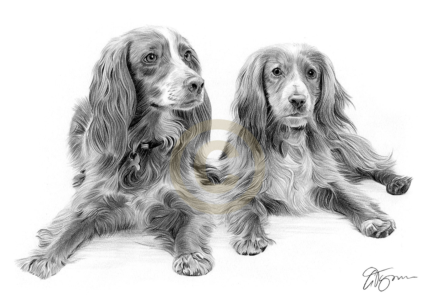 Pencil drawing commission of two spaniels by artist Gary Tymon