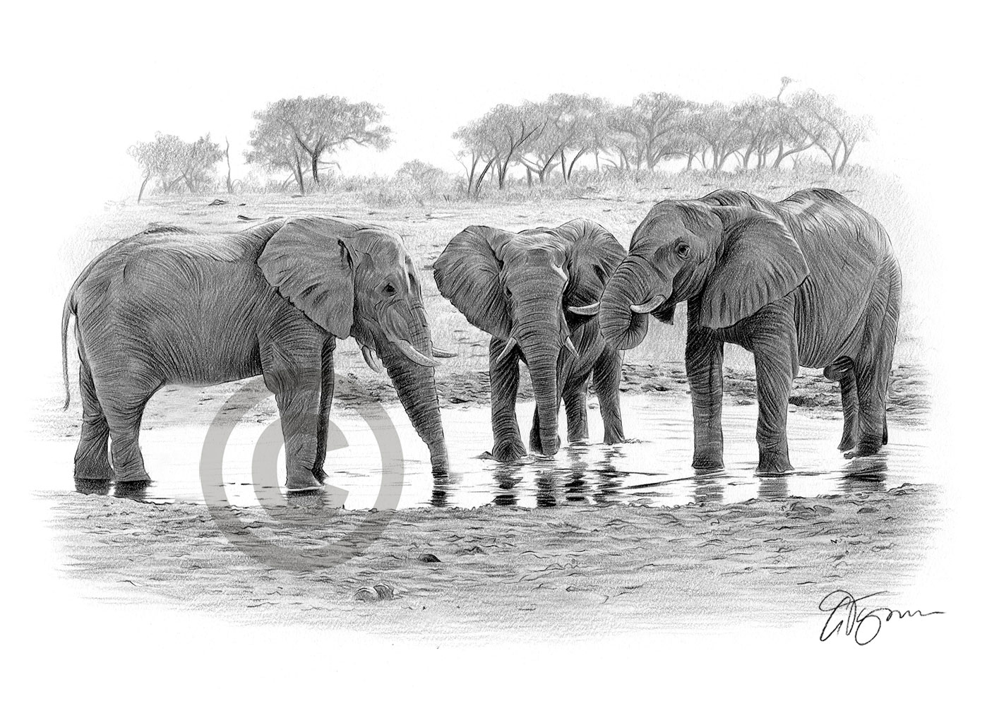 Pencil drawing of a group of elephants at a waterhole by artist Gary Tymon
