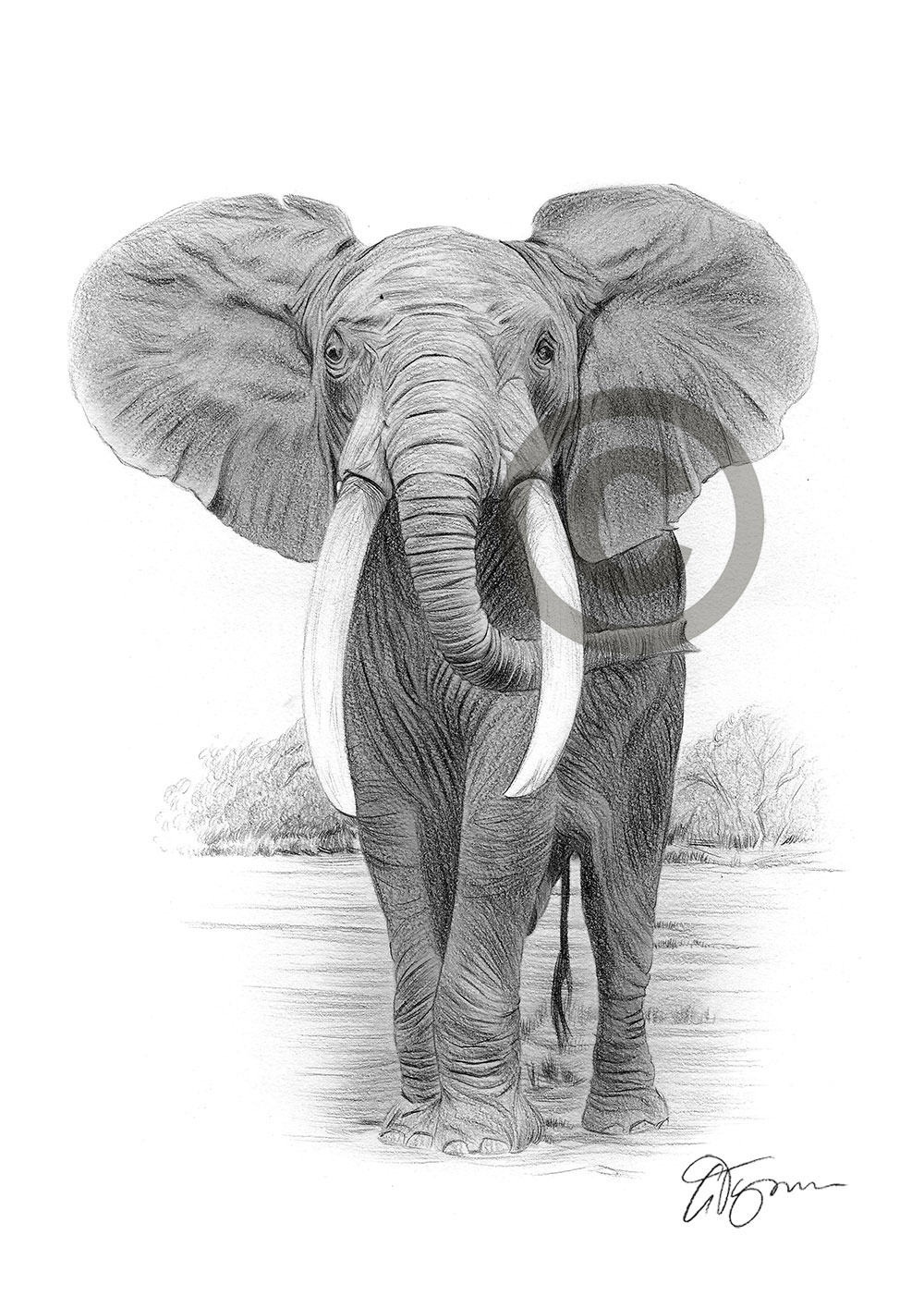 Pencil drawing of an African elephant by artist Gary Tymon