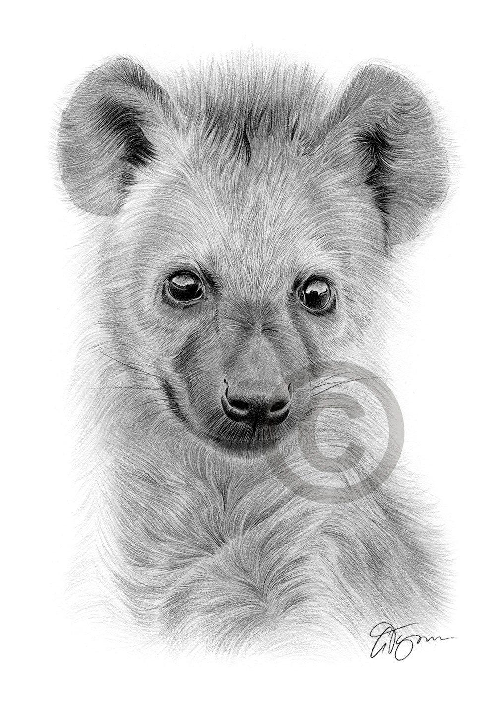 Spotted Hyena Cub pencil drawing by artist Gary Tymon