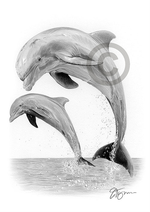 Pencil drawing of a dolphin