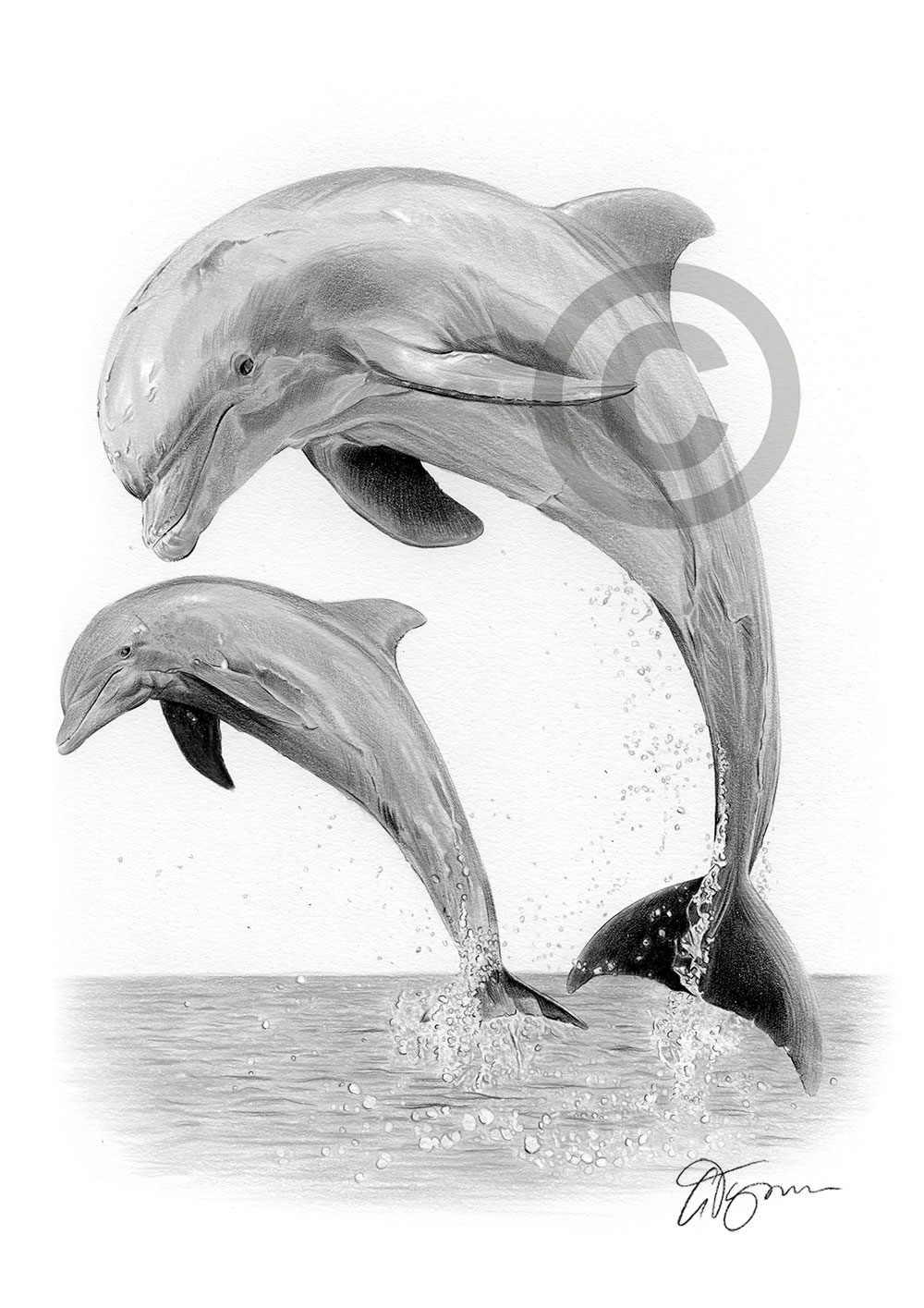 Pencil drawing of a dolphin by artist Gary Tymon
