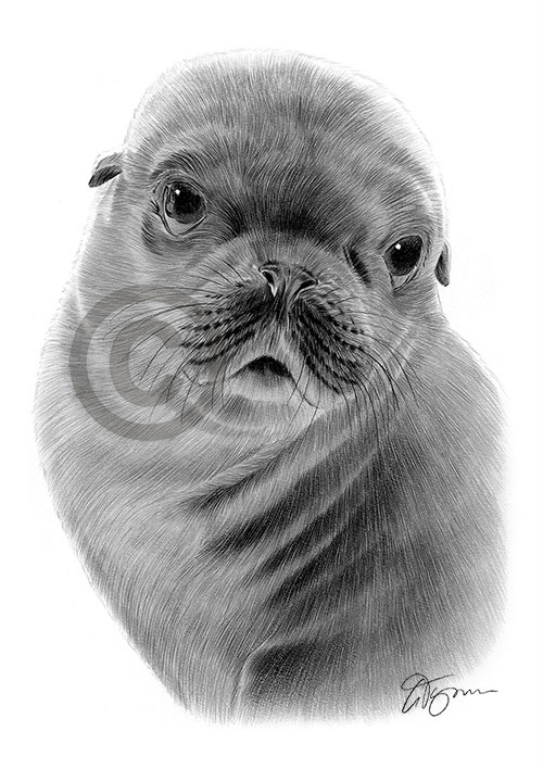 Pencil drawing of a seal
