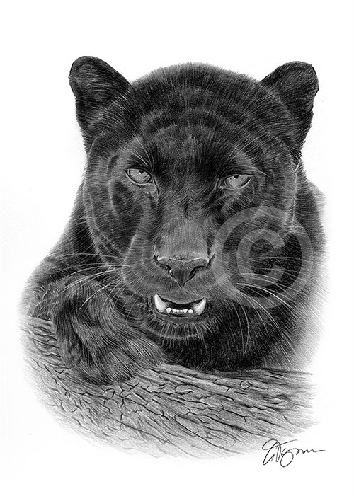 Adult Black Panther pencil drawing thumbnail