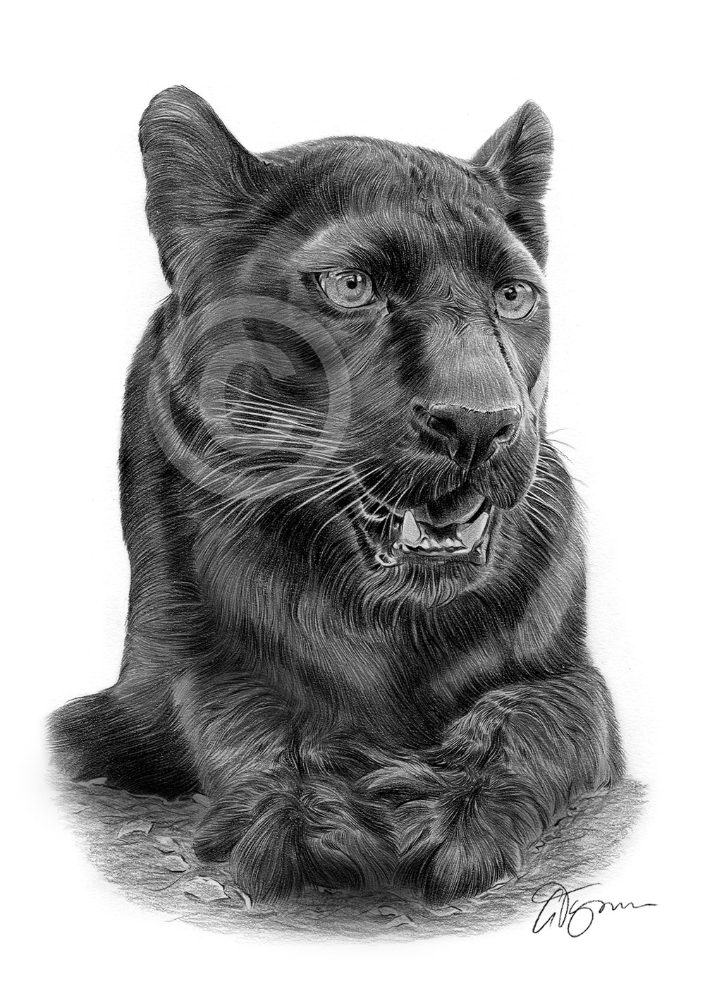 Big Cat Black Panther pencil drawing by artist Gary Tymon