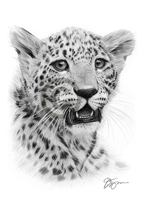 Cheetah cub pencil drawing thumbnail