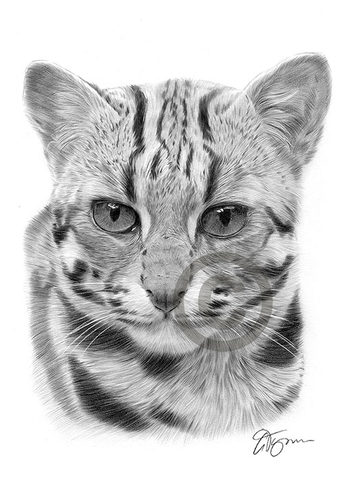 Asian Leopard Cat pencil drawing thumbnail