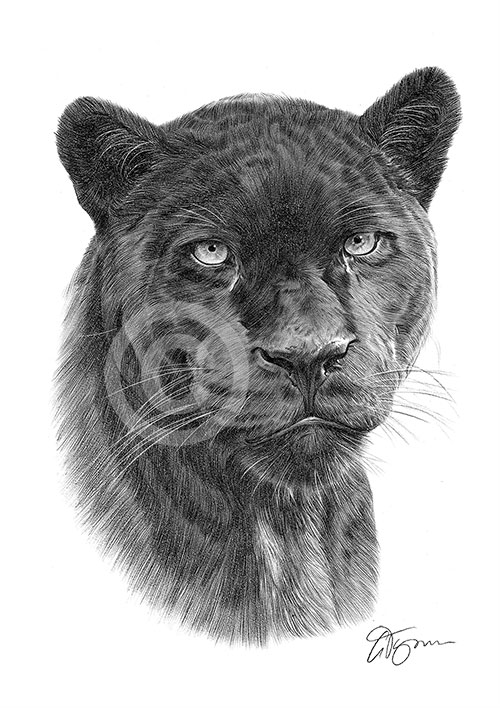 Black Panther pencil drawing thumbnail