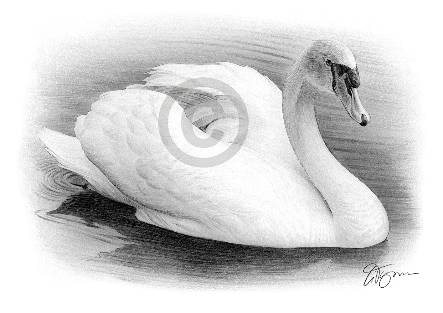 Scribble Pencil Drawings : Swan drawings in pencil imgkid the image kid