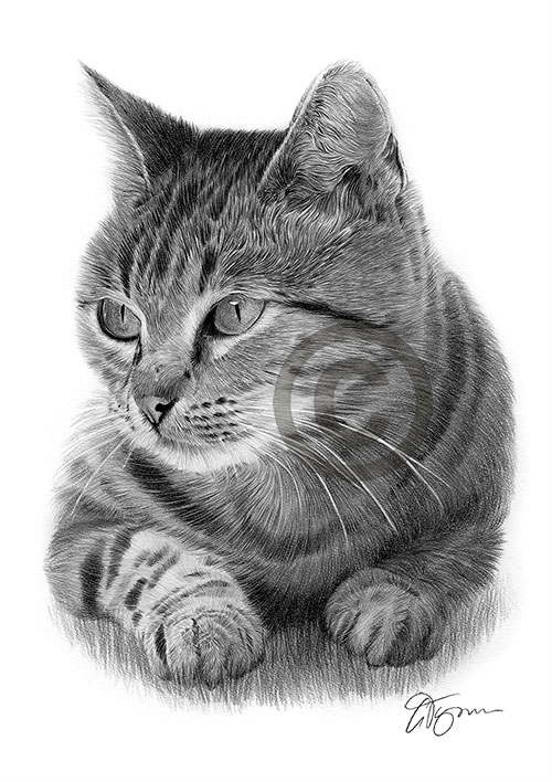 a Cat pencil drawing thumbnail