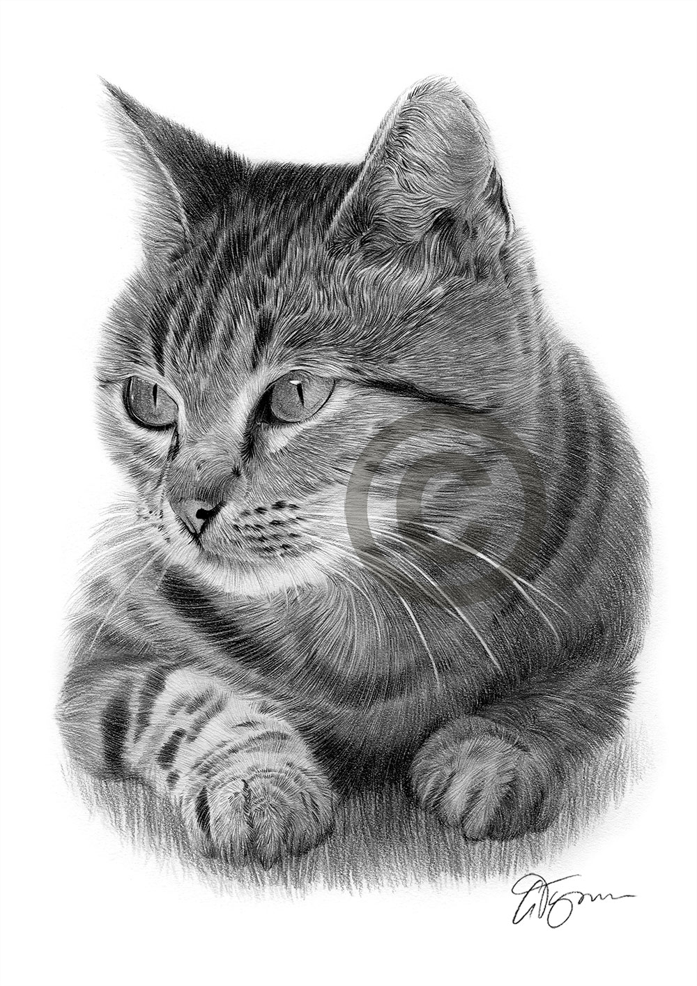 Cat pencil drawing by artist Gary Tymon