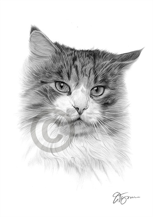 Tabby Cat pencil drawing thumbnail