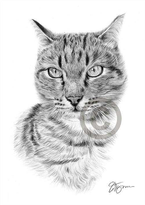 Cat pencil drawing thumbnail