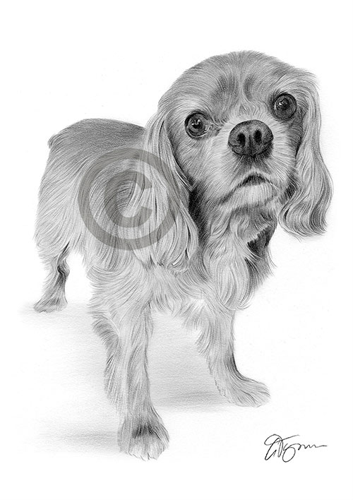 Pencil drawing of a young King Charles Spaniel puppy