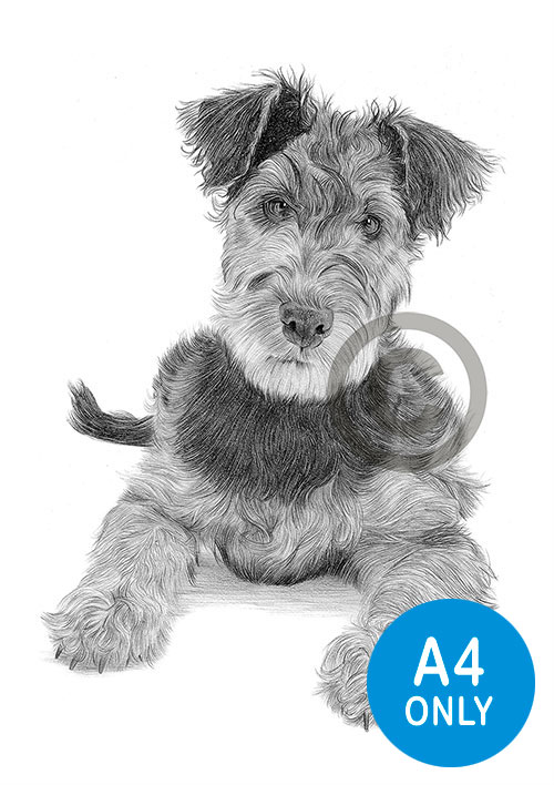 Pencil drawing of an Airedale Terrier puppy