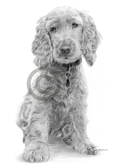 Pencil drawing of a young Cocker Spaniel puppy