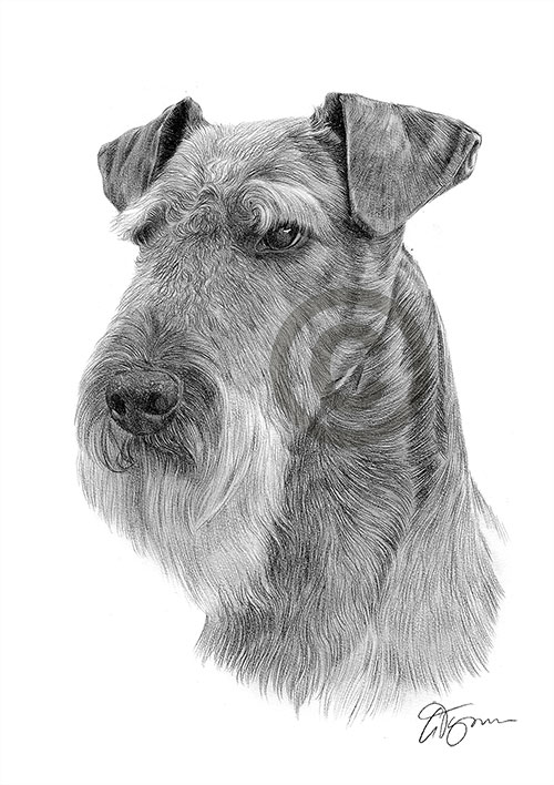 Airedale Terrier dog pencil drawing thumbnail