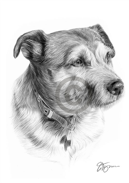 Patterdale Terrier dog pencil drawing thumbnail