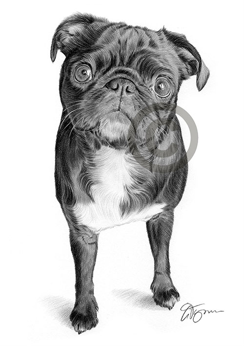 Pencil drawing of a black Pug