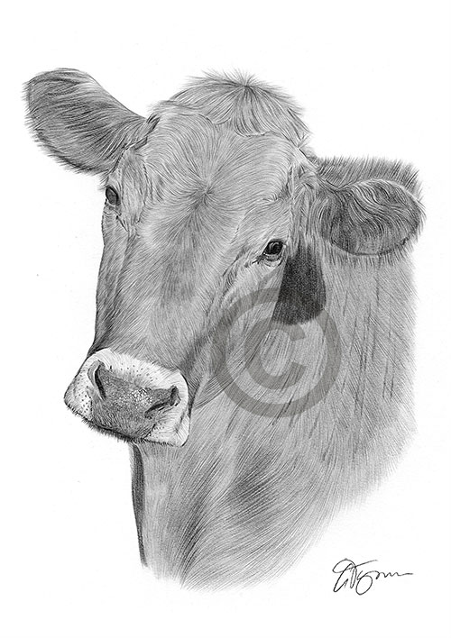 Cow pencil drawing thumbnail
