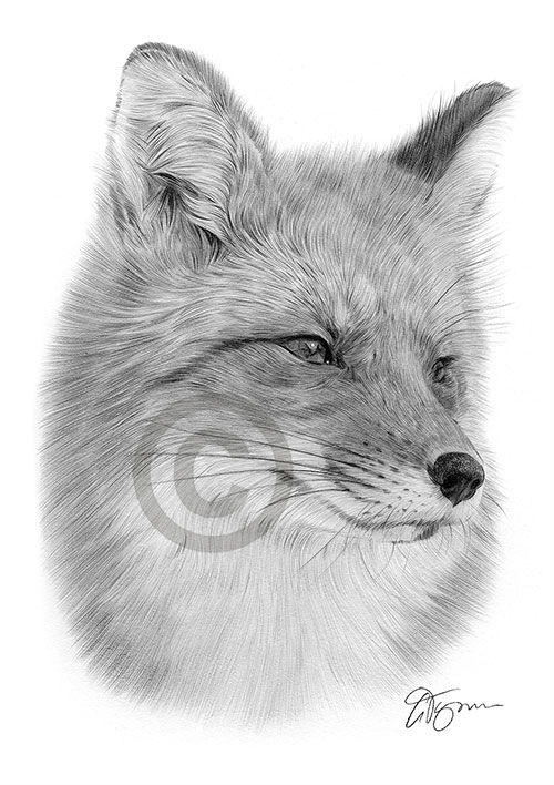 Portrait of a fox thumbnail