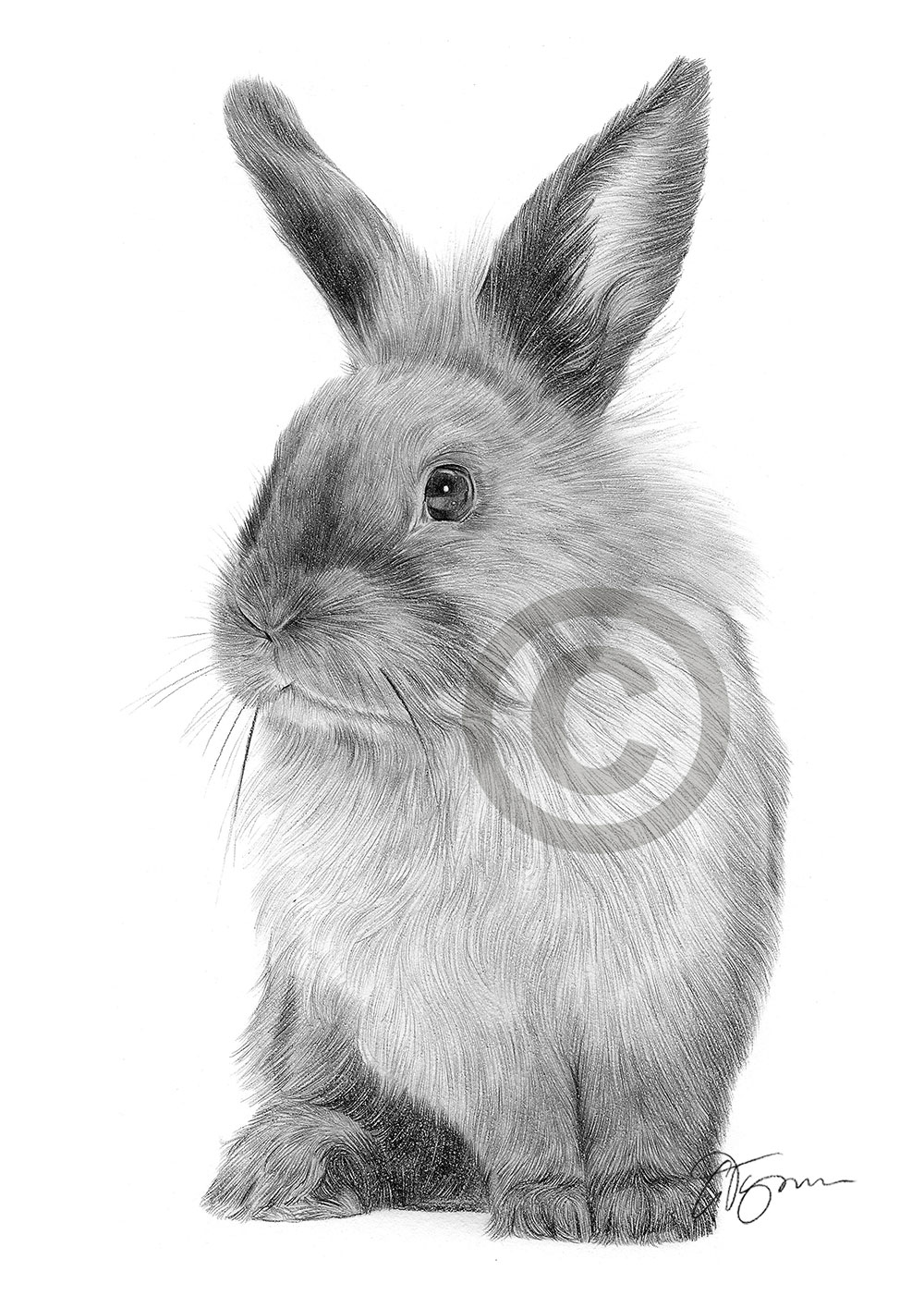 Pencil drawing of a rabbit by artist Gary Tymon