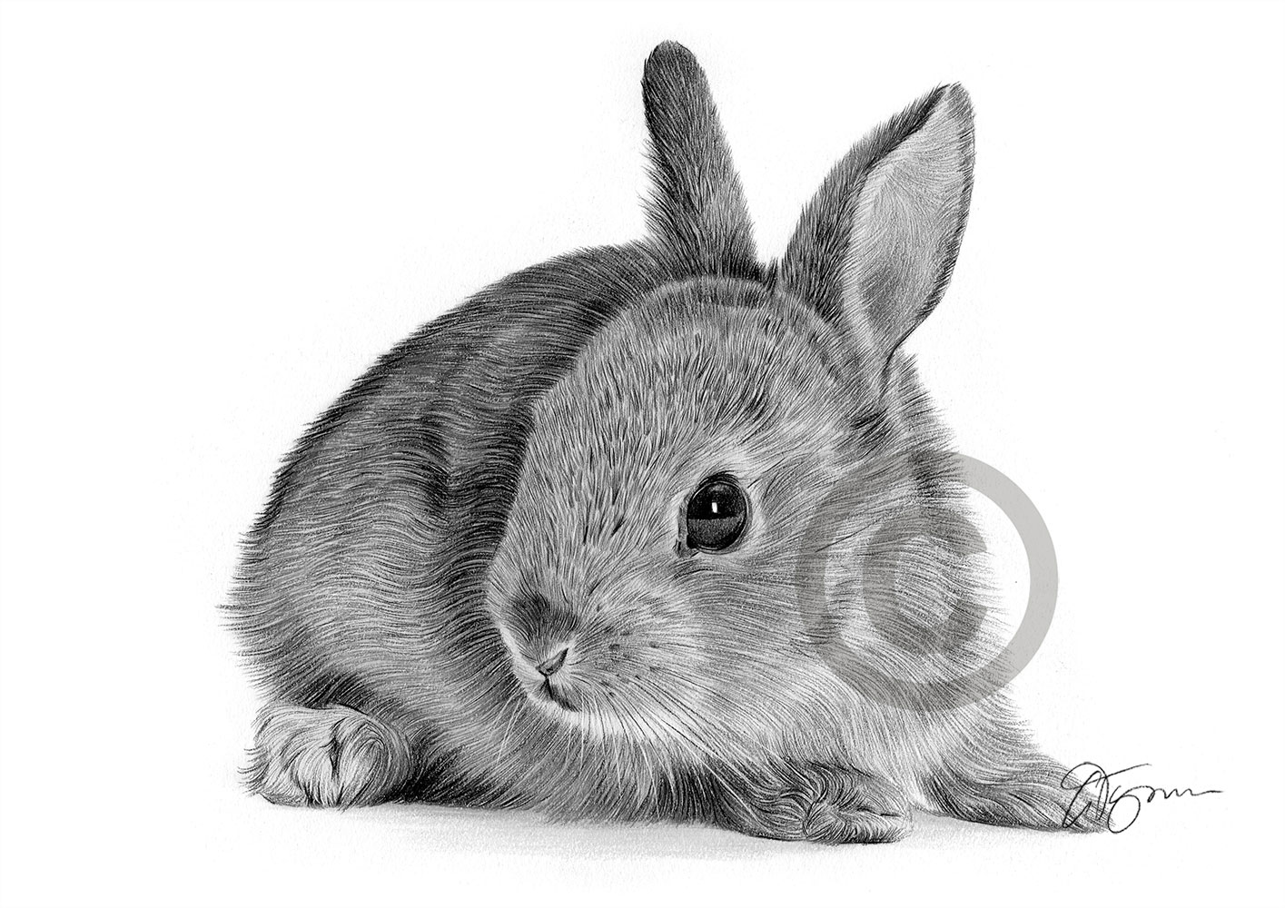 Bunny rabbit pencil drawing by artist Gary Tymon
