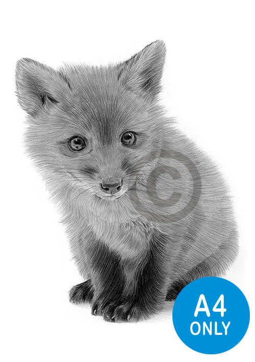 Red Fox Cub pencil drawing