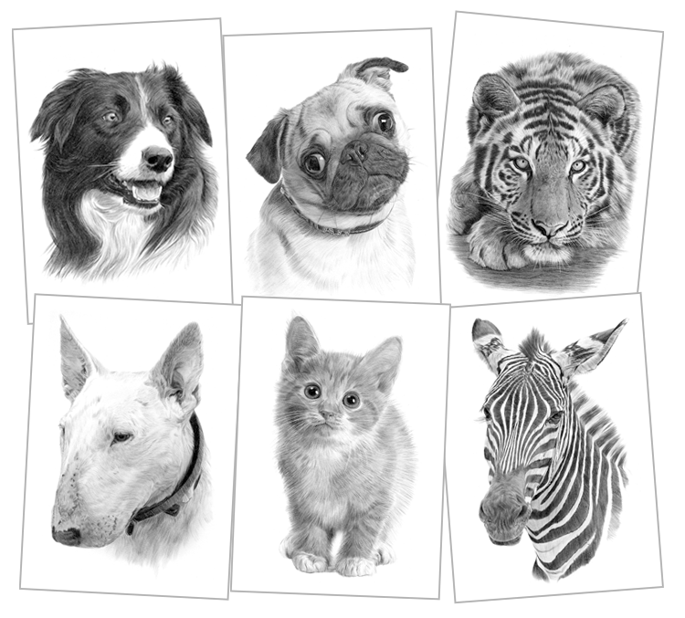 Animal pencil drawing prints signed by the artist Gary Tymon