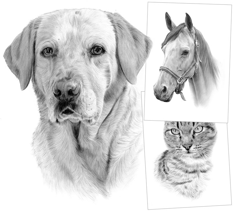 Pet portraits and pencil drawing commissions
