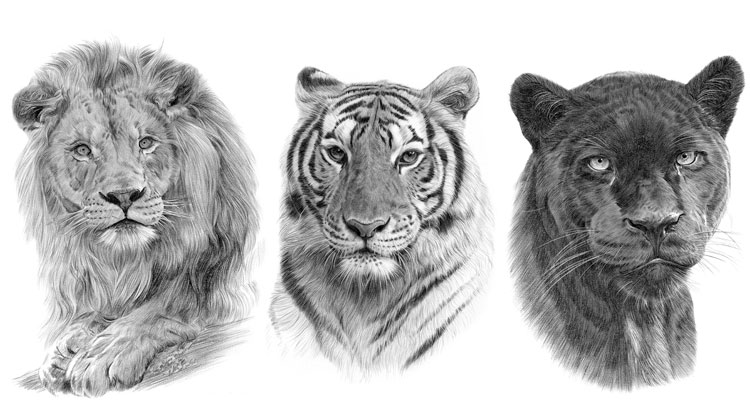 Print gallery for African Big Cats