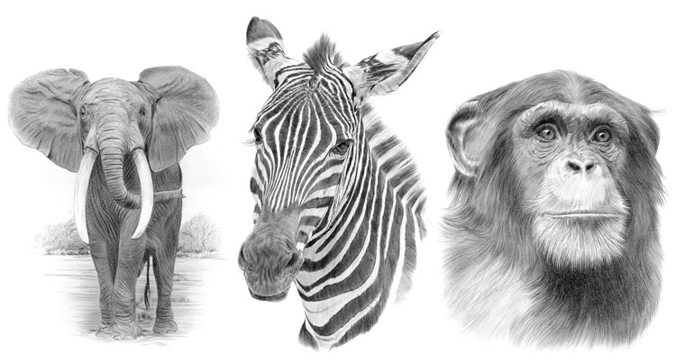 Print gallery for African Wildlife