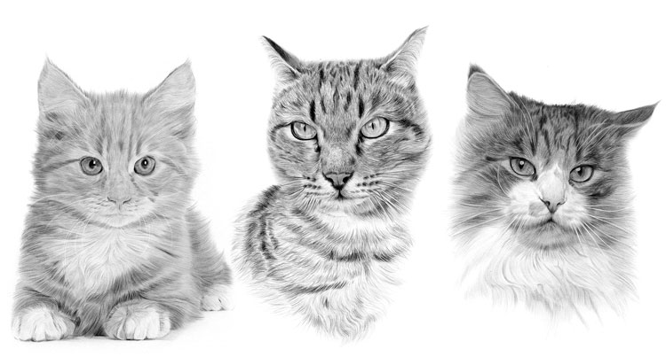 Print gallery for Domestic Cats and Kittens
