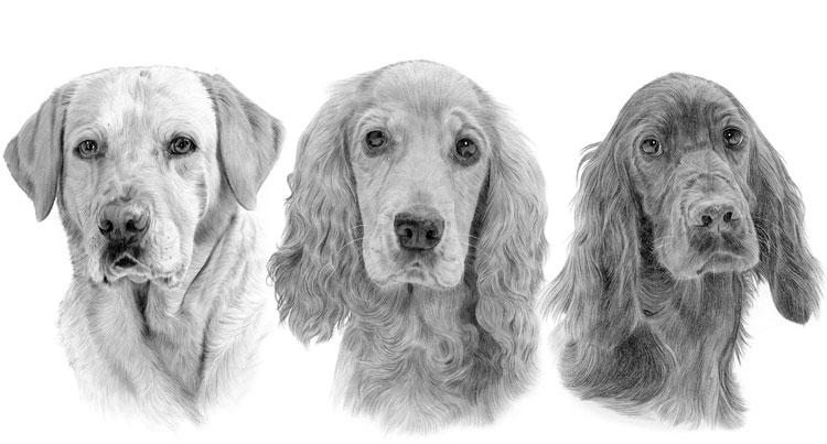 Print gallery for the Gun dog breed