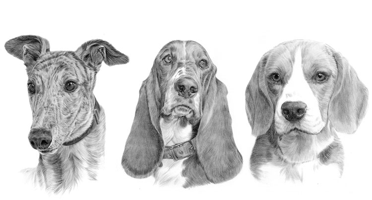 Print gallery for the Hound dog breed