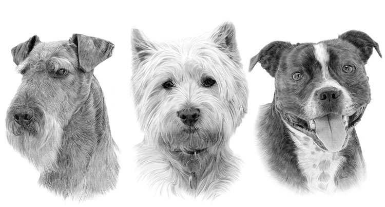 Print gallery for the Terrier dog breed