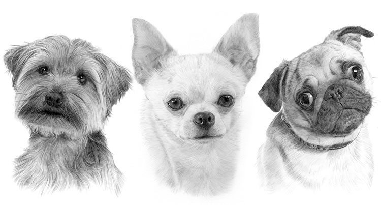Print gallery for the Toy dog breed