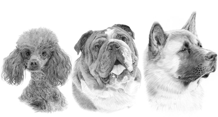 Print gallery for the Utility dog breed