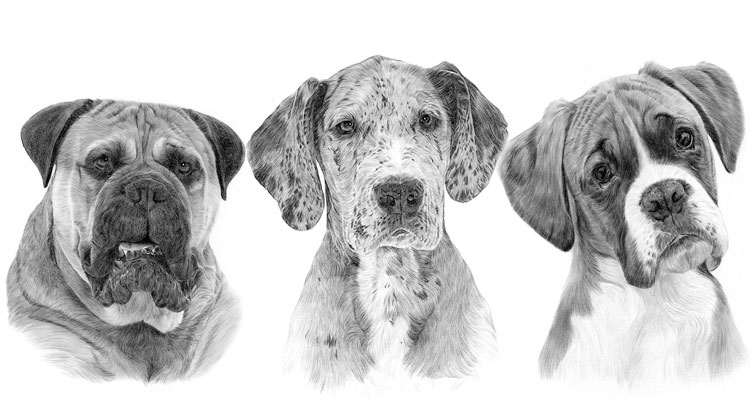 Print gallery for the Working dog breed